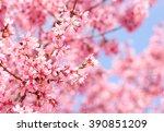 cherry blossom. sakura in... | Shutterstock . vector #390851209
