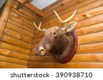 the head of a dead deer with horns and fur on the wall in the room - stock photo