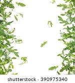 fresh arugula leaves. isolated... | Shutterstock . vector #390975340