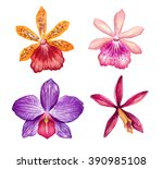 watercolor orchids  tropical... | Shutterstock . vector #390985108