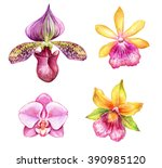 watercolor orchids  tropical... | Shutterstock . vector #390985120