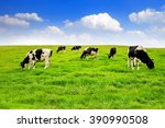cows on a green field and blue...