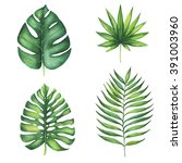 set of green tropical palm... | Shutterstock . vector #391003960