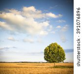 isolated tree in a tuscany... | Shutterstock . vector #391076896