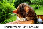 Stock photo sleeping funny cat 391126930