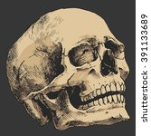 hand drawn human skull  sketchy ... | Shutterstock .eps vector #391133689