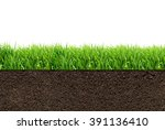 green grass with in soil... | Shutterstock . vector #391136410