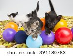 Stock photo tabby cat playing with food ball 391180783