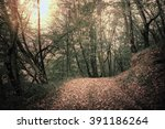 autumn forest. forest trail in... | Shutterstock . vector #391186264