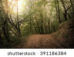 autumn forest. forest trail in... | Shutterstock . vector #391186384