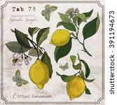 Vector Hand Drawing Lemon...