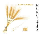 ears of wheat tied with twine... | Shutterstock .eps vector #391223929