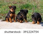 Stock photo three small cute puppy on the edge of the street 391224754