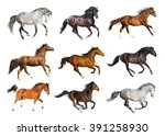 Stock photo group of the horses isolate on the white background 391258930