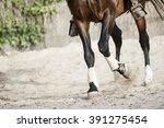 training horse detail | Shutterstock . vector #391275454