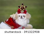 japanese chin dog in fancy dress | Shutterstock . vector #391322908