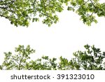 Stock photo green leaf tree branch isolated on white background 391323010