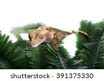 A Small Cute  Crested Gecko Is...