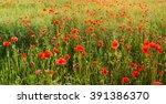 wildflowers poppies | Shutterstock . vector #391386370