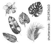 vector hand drawn tropical... | Shutterstock .eps vector #391392610