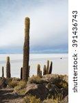view of the bolivian salt flats ... | Shutterstock . vector #391436743