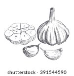 hand drawn raw garlic sketch.... | Shutterstock .eps vector #391544590