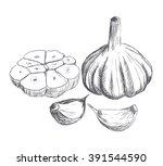 hand drawn raw garlic sketch.... | Shutterstock .eps vector #391544590
