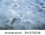 Footprints In Ice