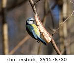 birds and animals in wildlife.... | Shutterstock . vector #391578730