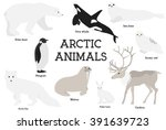 arctic animals collection. set... | Shutterstock .eps vector #391639723