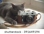 background with a cat that... | Shutterstock . vector #391649194