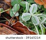 macro of frosty plant leaves in ... | Shutterstock . vector #39165214