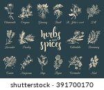 herbs and spices set. hand... | Shutterstock .eps vector #391700170