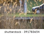 green ears isolated on green ... | Shutterstock . vector #391783654