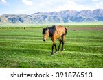 mountain view with horse on... | Shutterstock . vector #391876513