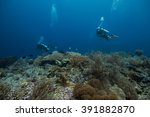 coral | Shutterstock . vector #391882870