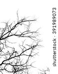 branch silhouette on a white... | Shutterstock . vector #391989073