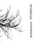branch silhouette on a white... | Shutterstock . vector #391989130