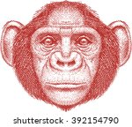 calm monkey face  chimpanzee   Shutterstock .eps vector #392154790