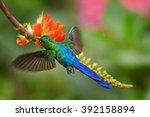 very colorful hummingbird... | Shutterstock . vector #392158894
