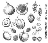 set of vector hand drawn food.... | Shutterstock .eps vector #392162710
