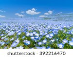 nemophila  flower field at... | Shutterstock . vector #392216470