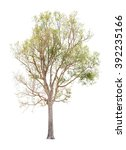 tree isolated on white... | Shutterstock . vector #392235166