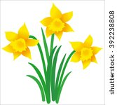 illustration of three daffodils ...