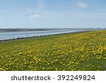 Dandelions On A Field At The...