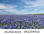 texas bluebonnet filed and blue ... | Shutterstock . vector #392259910