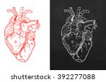 heart  natural heart  sketch... | Shutterstock .eps vector #392277088