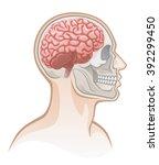 human head  | Shutterstock .eps vector #392299450