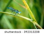 Blue Dragonfly On Green Grass...