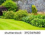 Hosta Plants In The Walled...